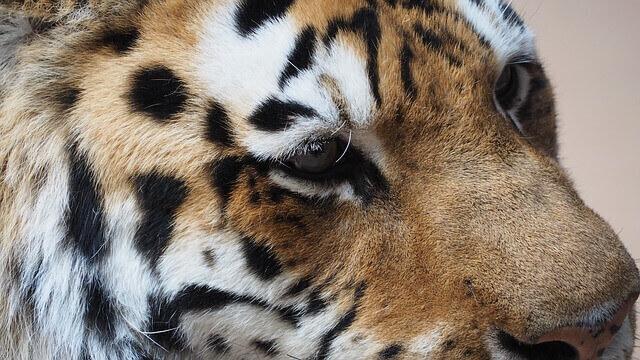 Tiger Friedrich Howanietz Verkaufsschulung Verkaufstraining Motivation