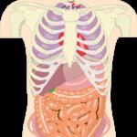 Organe sind ein System Friedrich Howanietz
